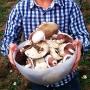 Edible Mushroom ID & collection