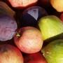 Fruit harvest