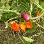 Harvest_