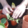 Planting up new veg plants