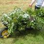 Wheelbarrow full of cuttings
