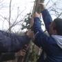 De-snagging trees