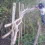 Staking & binding hedge