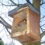 Nestbox clean out-Autumn