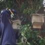 Putting up batbox to oak tree