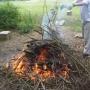 Burning diseased limbs & brush