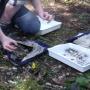 Stream invertebrate survey results
