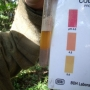 pH testing the woodland soil