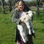 Holding lambs