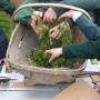 Making Wildflower salad