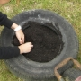 Planting potatoes in old car tyres i