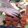 Infilling pots with compost