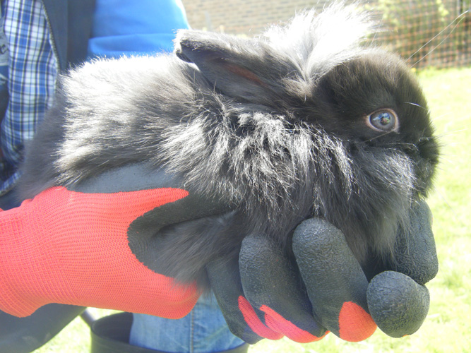 Holding baby bunnies