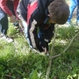 Harvesting willow for use in 'creature craft'.