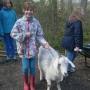 Walking Billy Elvis, the goat!