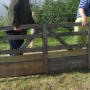 Moving sheep hurdles