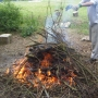 Burning diseased limbs & brush