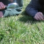 Surveying meadow plant & insect life