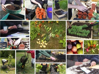 Grow your own Fruit and Veg Workshop